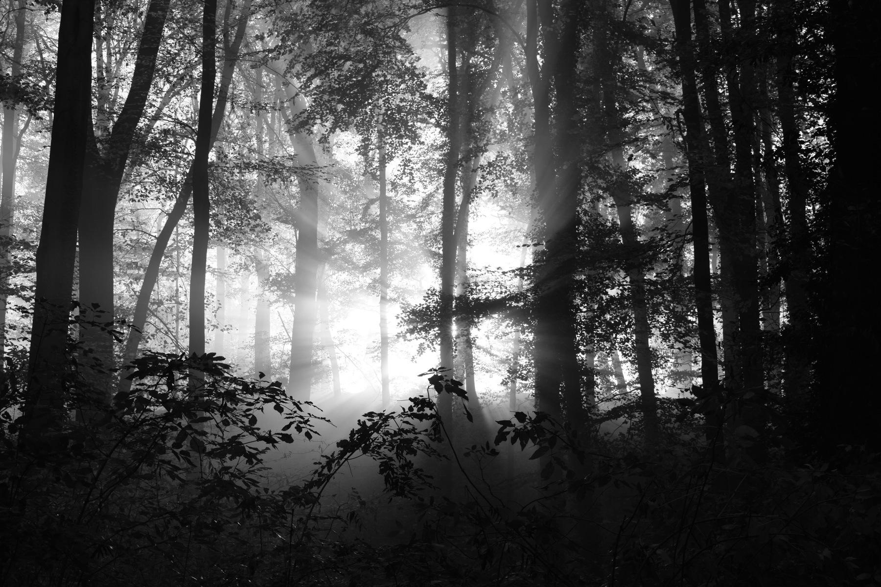 Noch tiefer in den Wald