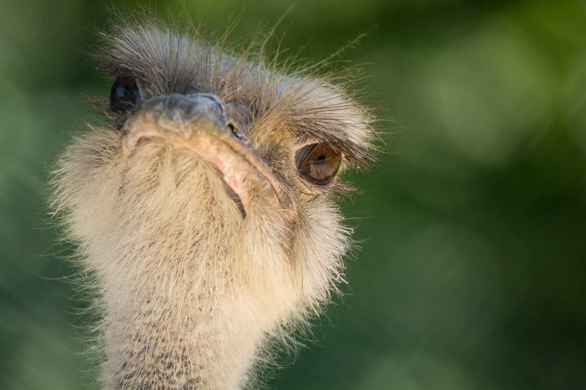Komische Vögel und andere Zeitgenossen – Fotospaziergang im Opel-Zoo