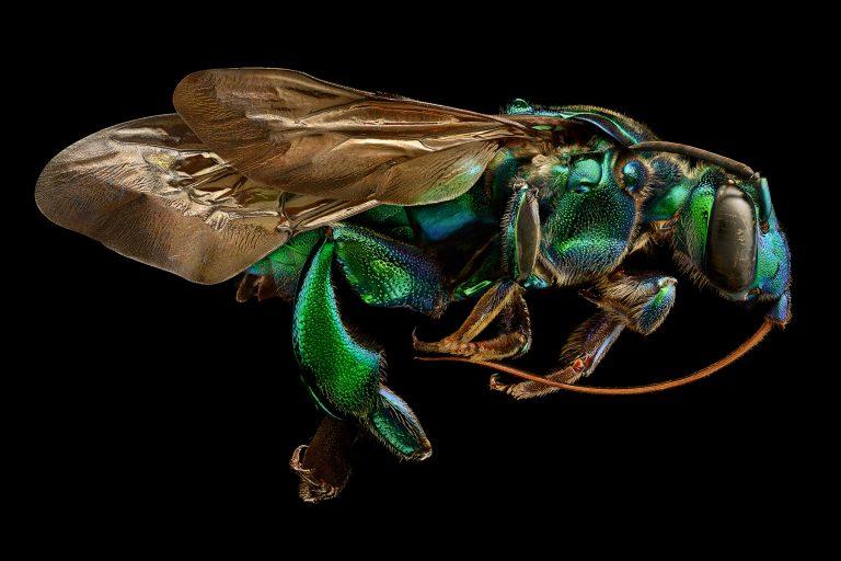 Insekten-Porträts von Leon Biss
