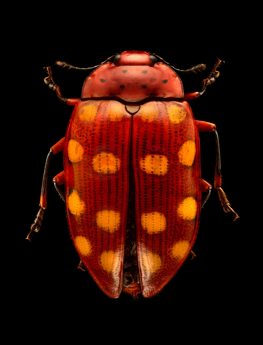 Assasin Bug (Foto: )