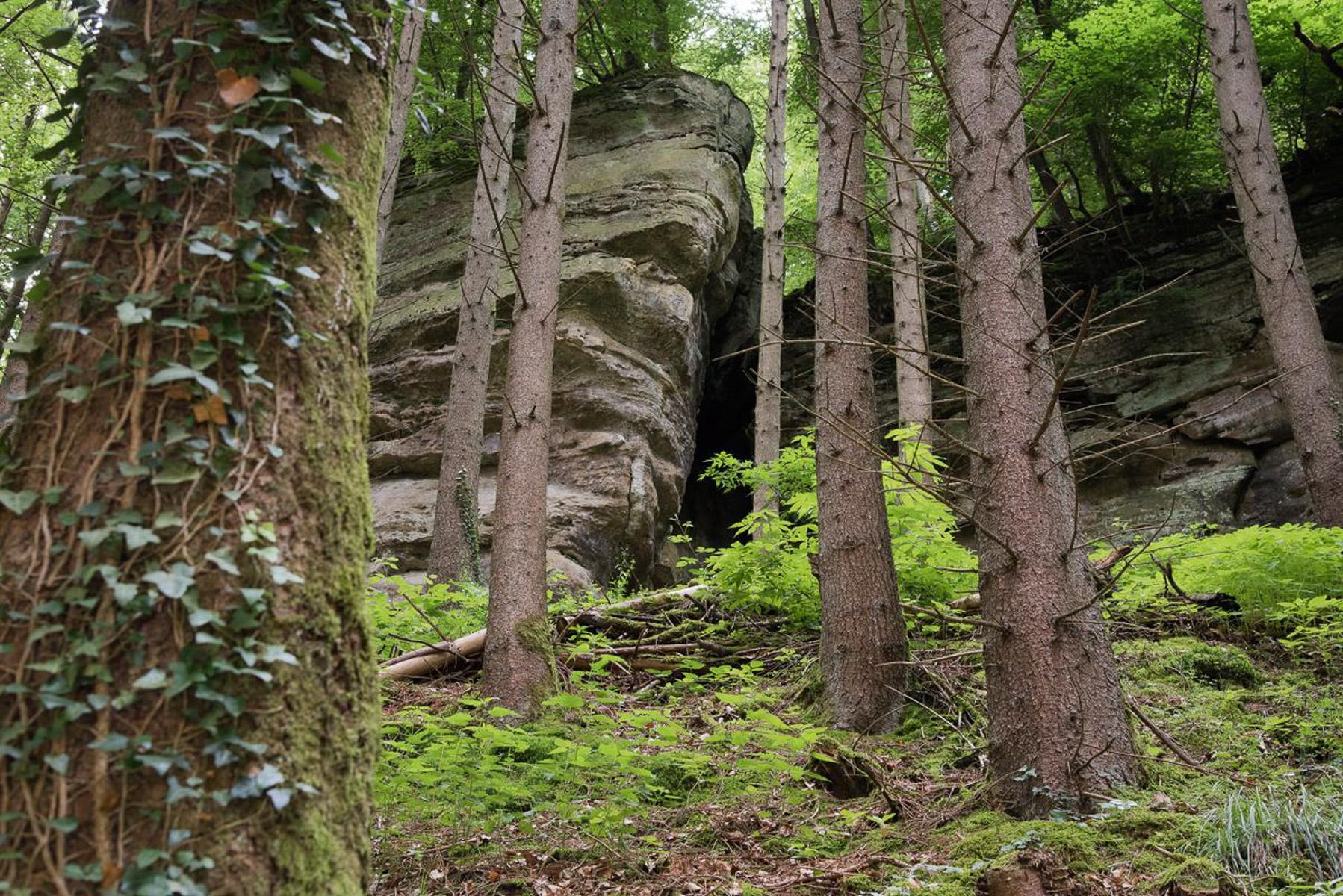 Wald (Foto: Danielle Switala)