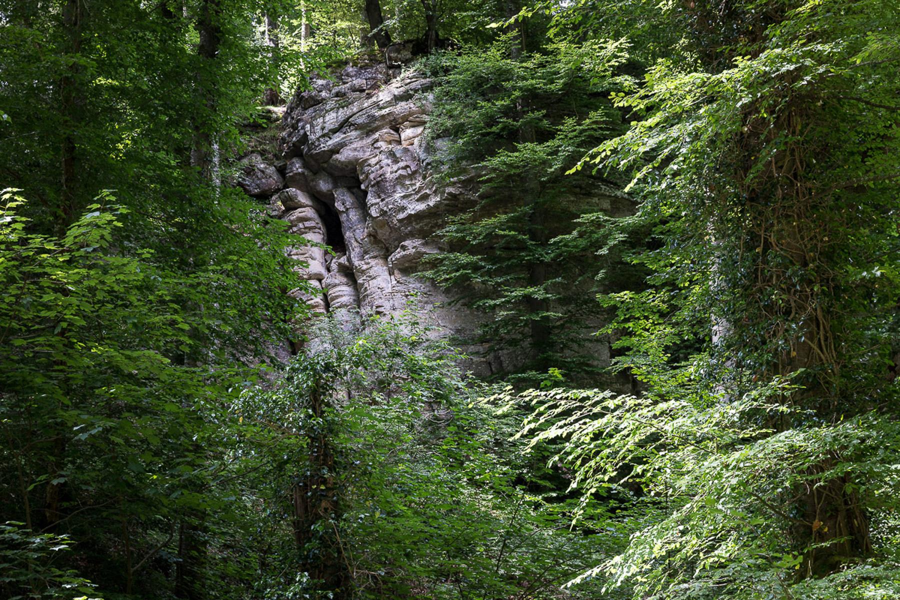 Wald (Foto: Monika Seidel)