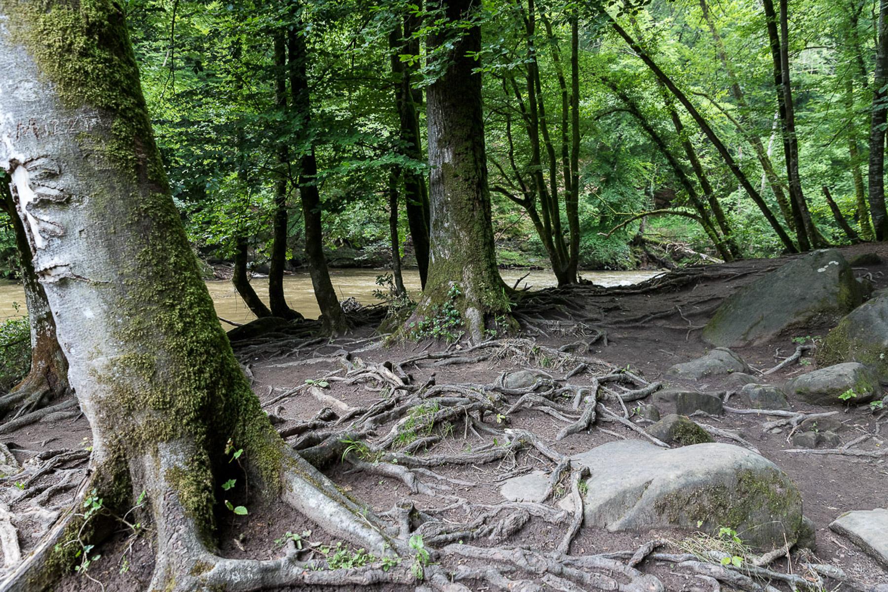 Im Wald (Foto: Monika Seidel)