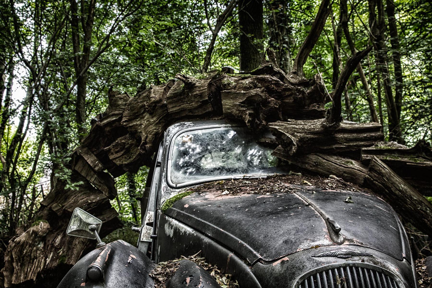 Im Auto-Skulpturenpark (Foto: Monika Seidel)