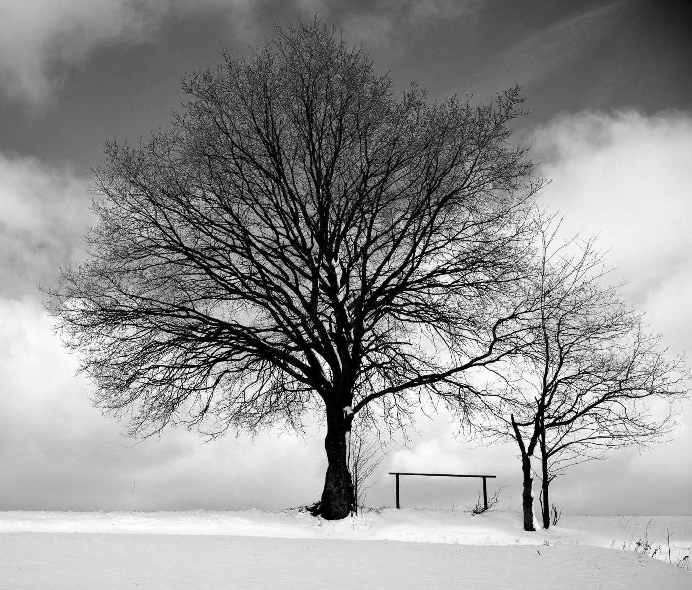 Der Baum (Foto: Danielle Switala)