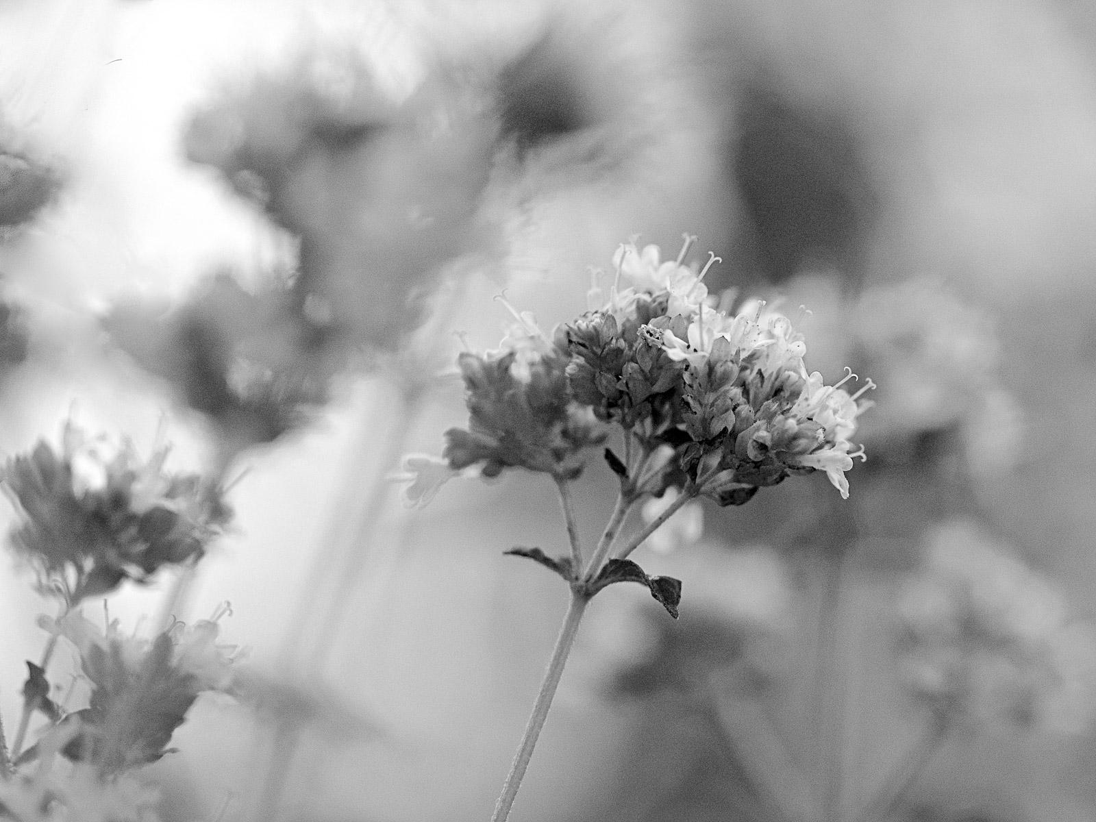 Bild02 (Foto: Ingrid Bornhofen)
