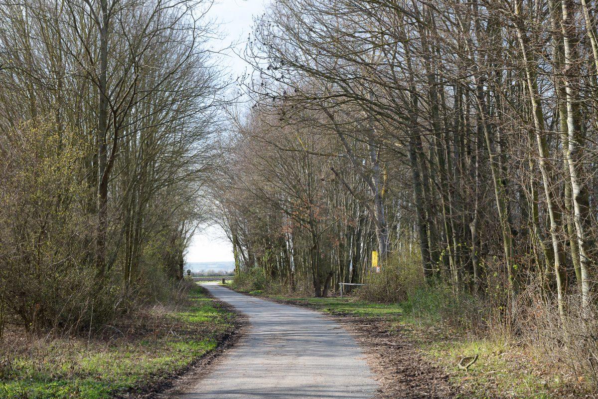Mach was draus: Waldweg (Daniele Switala)