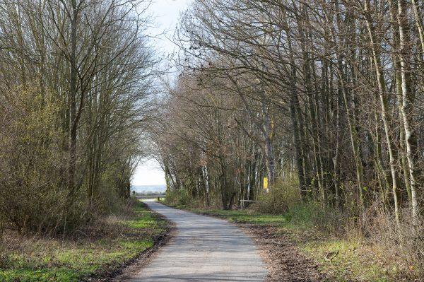 Waldweg (Foto: Danielle Switala)