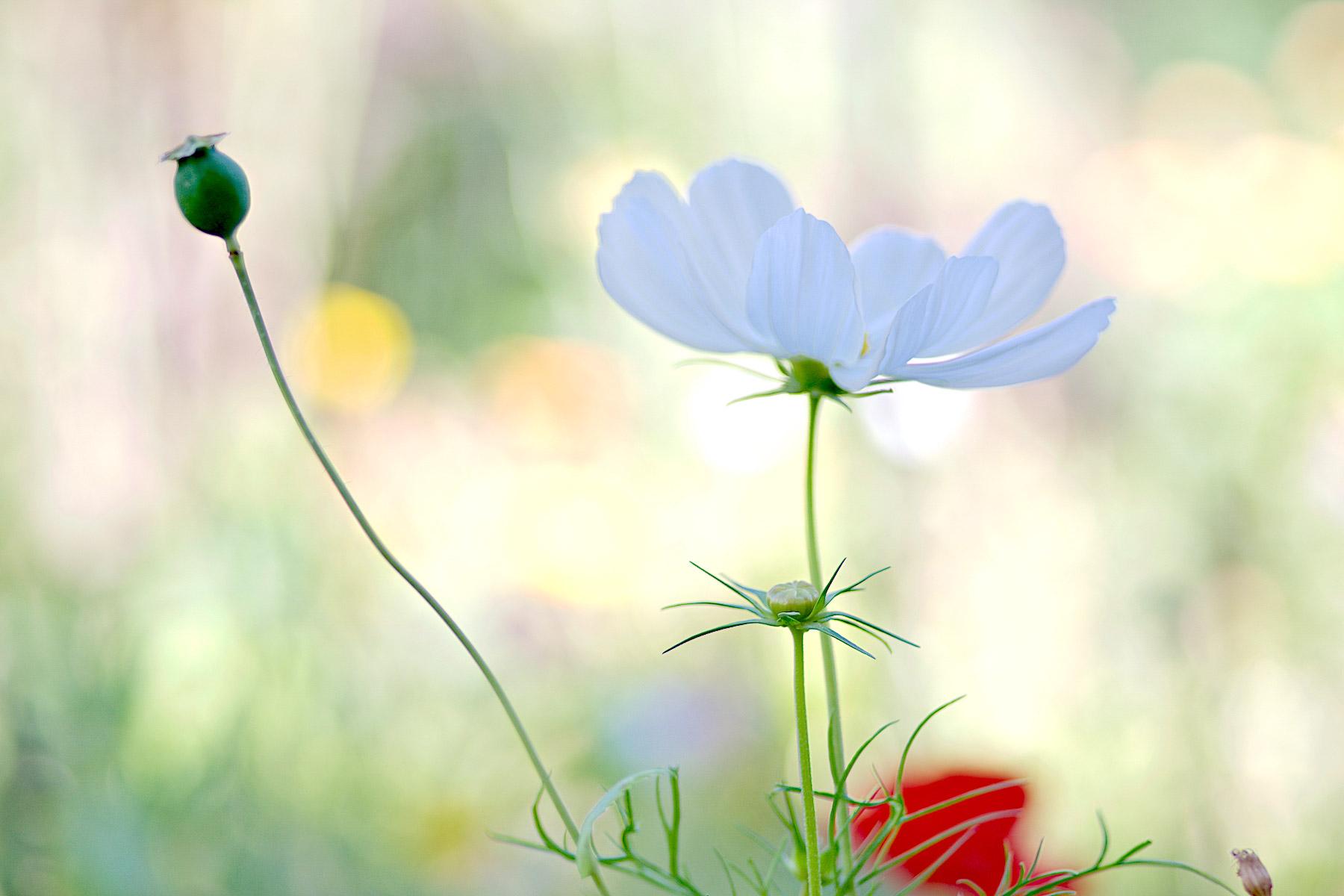 Gartenträumerei (Foto: )