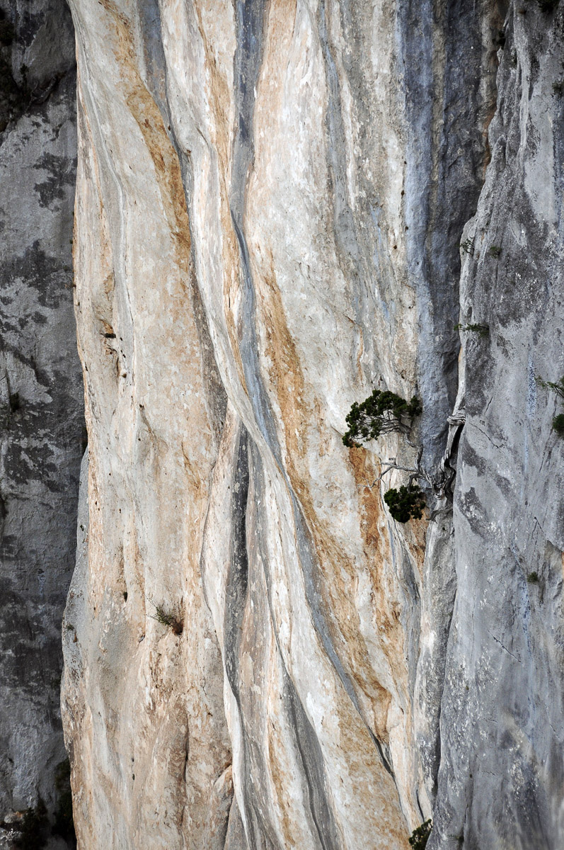 Natur abstrakt (Foto: Olaf Nagel)