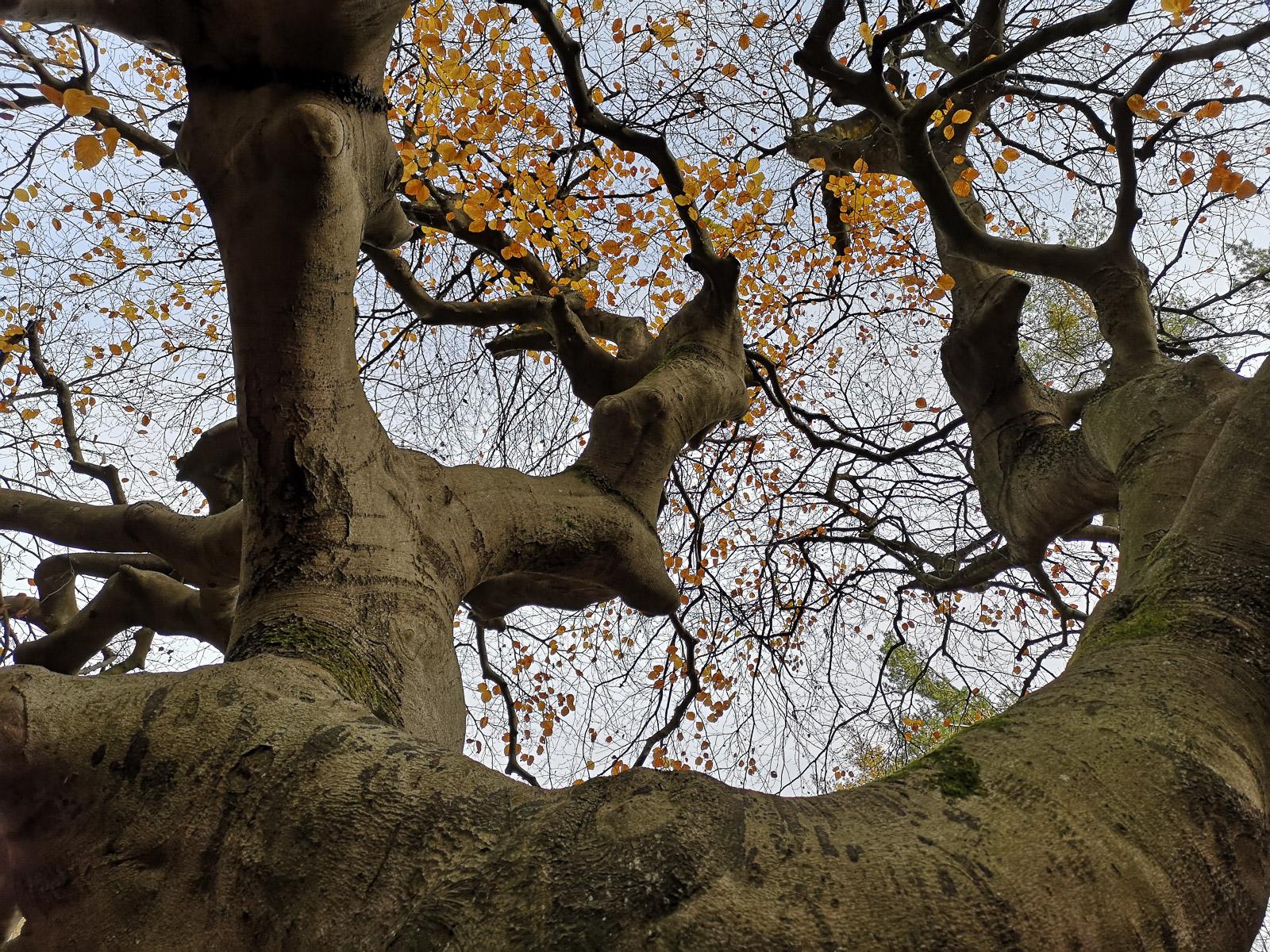 Auch der krumme dicke Baum hängt am Blatt (Foto: Reinhard Switala)