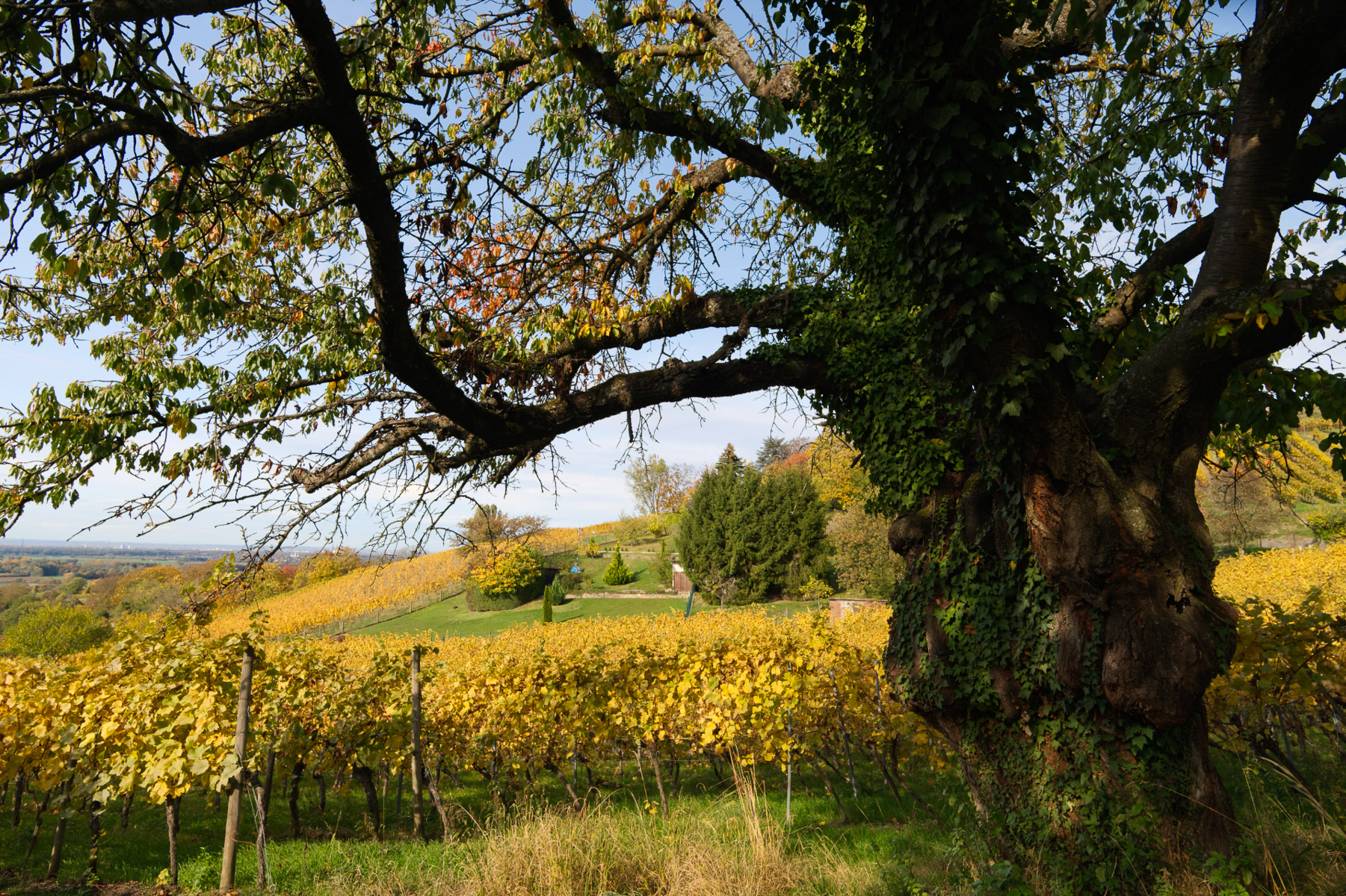 Bensheim 2020-10-24 (86) (Foto: Danielle Switala)