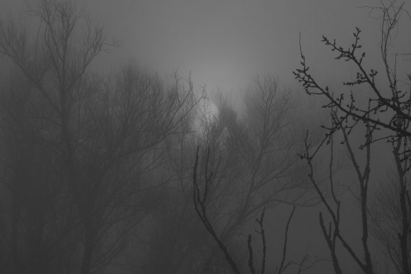 An den Mond (Foto: Peter Stollenmayer)