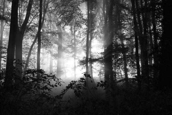 Noch tiefer in den Wald (Foto: Peter Stollenmayer)