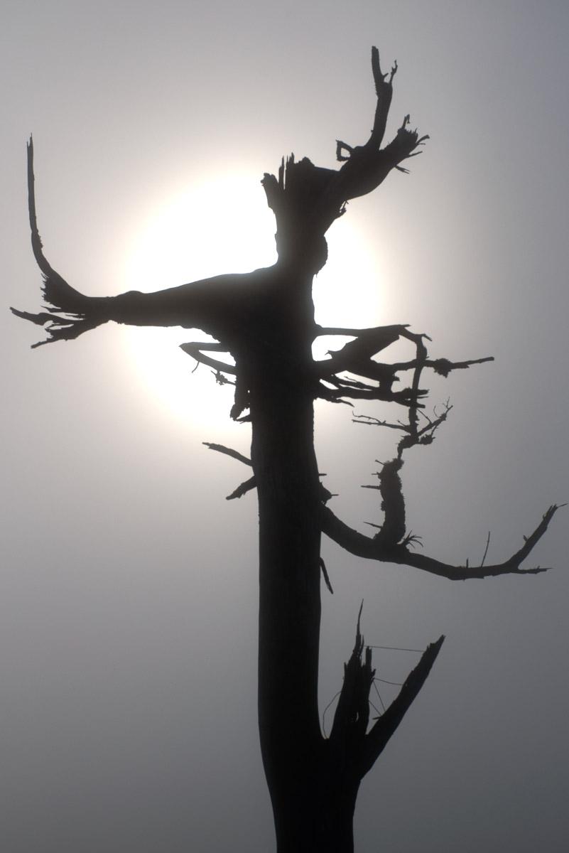 Großer Feldberg im Nebel (Foto: Peter Stollenmayer)