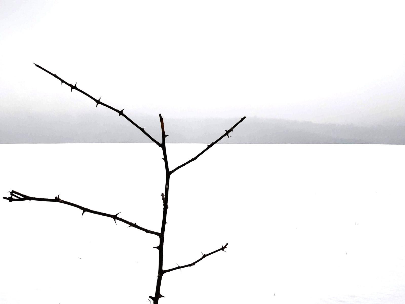 Dornen im Schnee (Foto: Peter Stollenmayer)