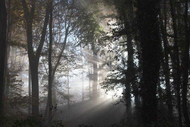 Bildbewertung 2020 Runde 1: Wald & Bäume